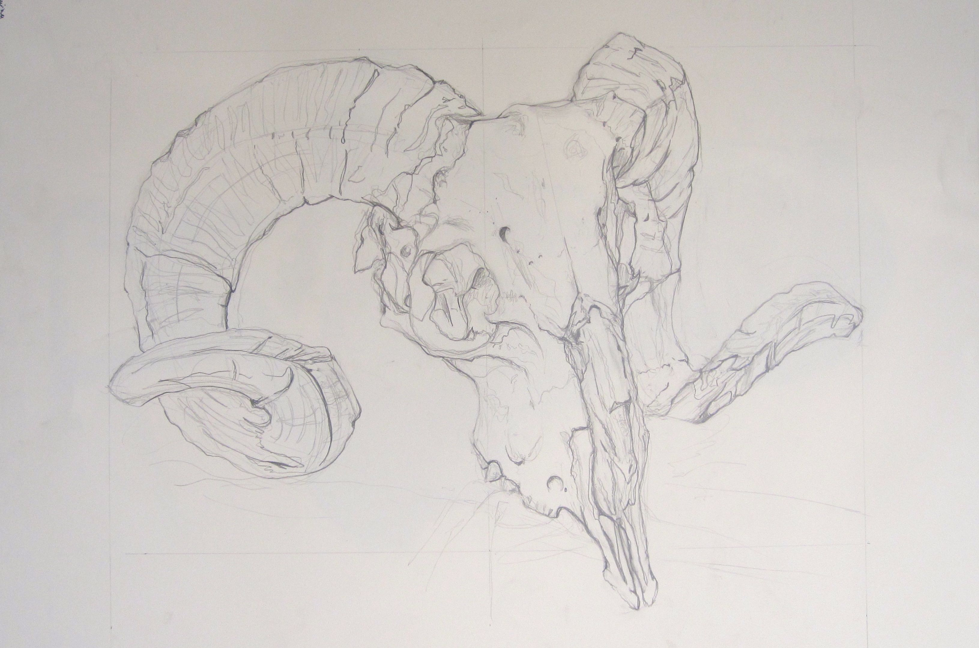 Contour Line Drawing In Art : Studio art at college of san mateo student work gallery